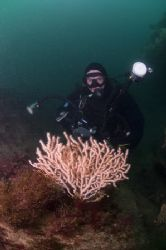 Mark with a pink sea fan. 10.5mm, D200.